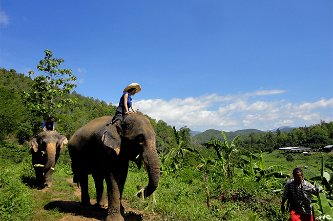 elephant, exotic, elephant riding, elephant camp