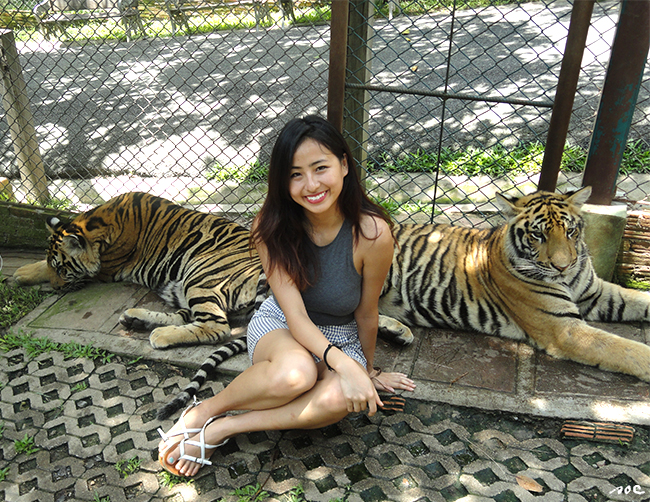thailand, kingdom, tigers, chiangmai, love, exotic